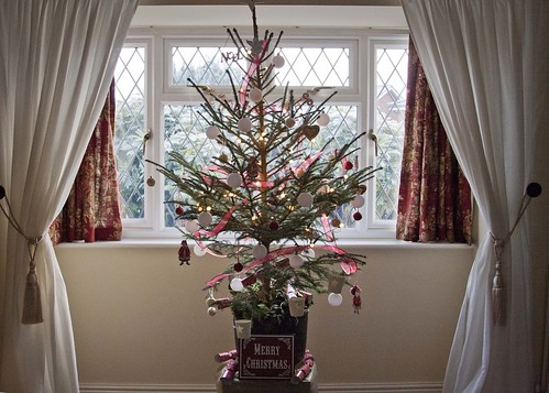 Our real Christmas tree at home in Shropshire