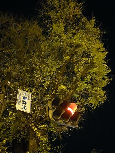 <br />銀杏と信号機