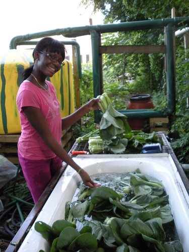 Dianna Grant of East New York Farms! Youth Internship program washes bok choy at the United Community Centers Youth Farm in Brooklyn, N.Y. East New York Farms! Is a recipient of the USDA Community Food Projects grant. Photo courtesy East New York Farms!