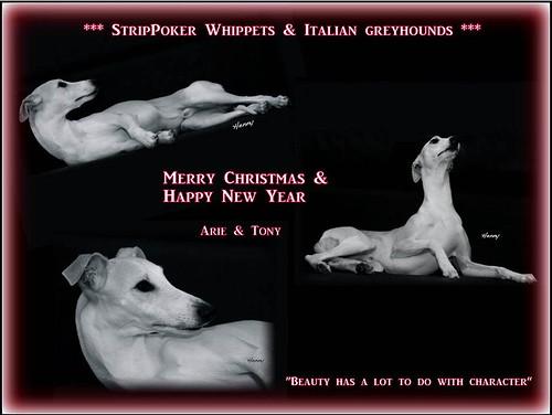 Weihnachten 2012Toni