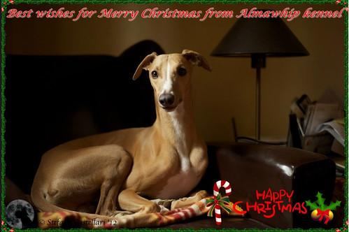 Weihnachten 2012Almawhipp