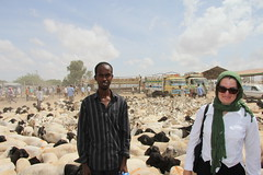 Camel Market (21)