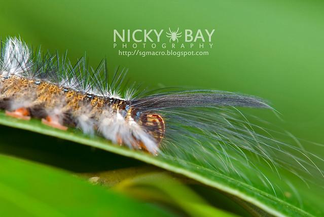 Caterpillar - DSC_7852