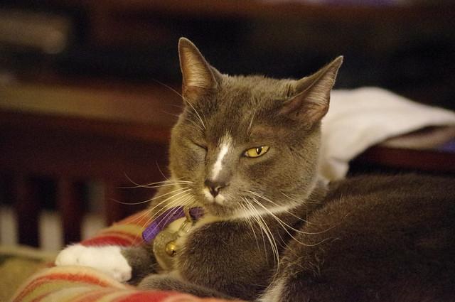 2012_09_30_2012 cats 028