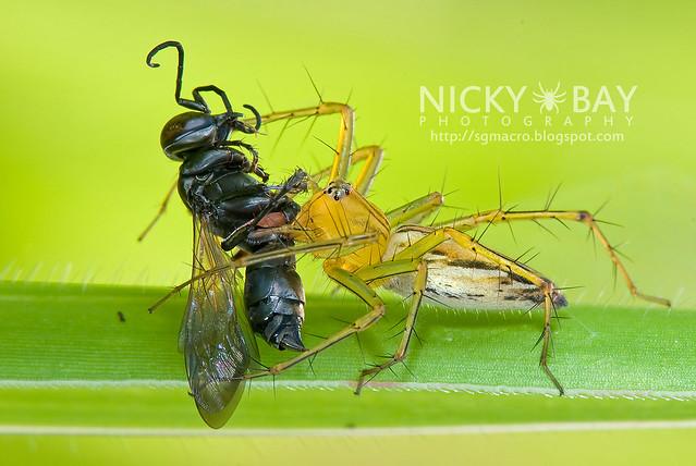 Lynx Spider (Oxyopidae) - DSC_0170