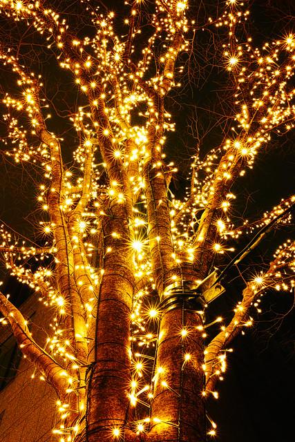 20121230_01_Marunouchi Illumination