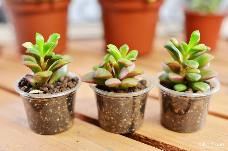2012多肉植物11.jpg
