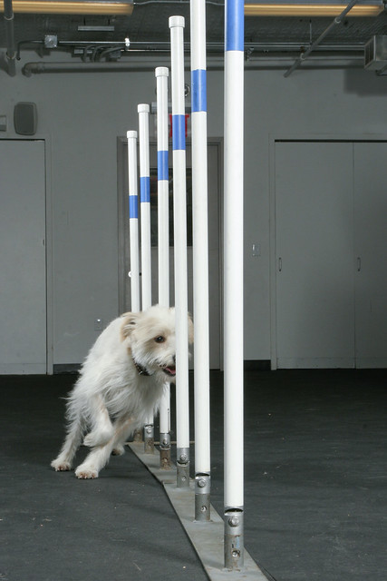 Dog Agility Weave Spoles For Sale