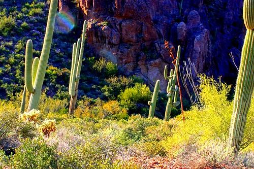sunset arizona cactus usa mountains southwest dusty sonora cacti december desert hiking adventure trail environment daytime vistas sonoran superstition arid mesa daytrip 2012 sagauro goldcanyon coolclouds bluffsprings