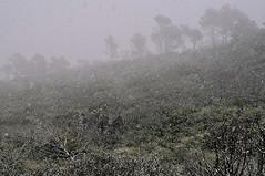soil(0.0), winter(0.0), tundra(0.0), plain(0.0), frost(0.0), plateau(0.0), freezing(0.0), fog(1.0), snow(1.0), rain and snow mixed(1.0), haze(1.0), forest(1.0), morning(1.0), mist(1.0),