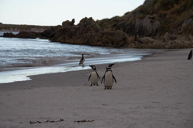 Falklands 3 045.jpg