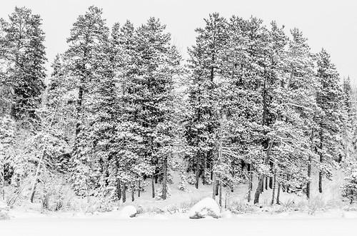2013 01 12 Winter Wonderland 017
