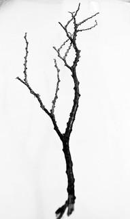 IMG_0049 Branch