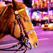 Horse in Times Square by N A T A L I E