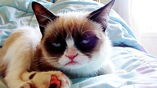 grumpycatsideeye
