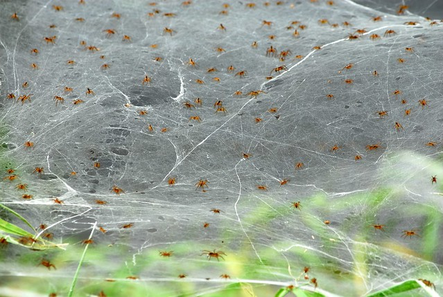 Spider sheets 2