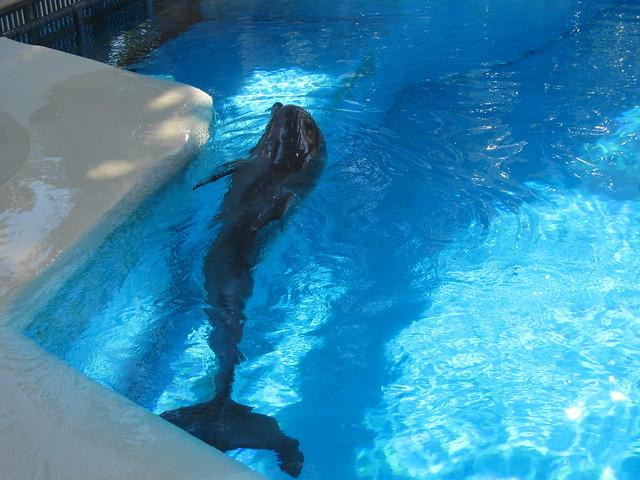 Secret Garden Dolphin Habitat At Mirage Flickr Photo Sharing