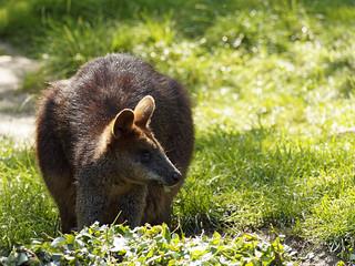 Hình ảnh của Walibi. diergaardeblijdorp rotterdam zoo dierentuin