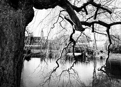 That was then!  Seine et Marne, France                    (Canon AE-1) circa 1976 ©Pictures are mine, except if stated otherwise.  #landmarksofmylife  #hasbeenOtherapy #photoonfilm  #bruitsdecouloirs  #exvotography #ff #blackandwhite #l4l #tagfo