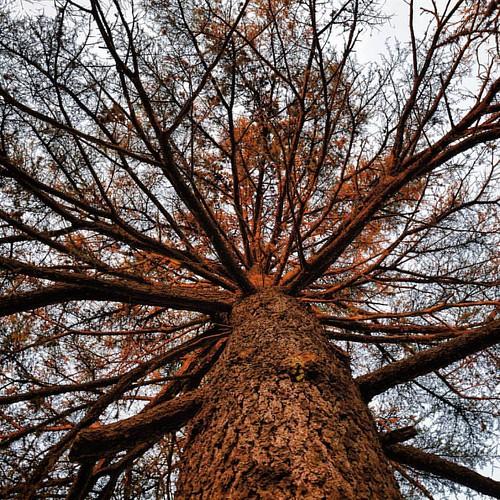 Hay que mirar mas hacia arriba #nofilter #lookup #glanceup #mirarhaciaarriba #tree #arbol #NikonD3300 #D3300