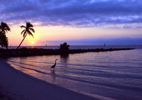 beach sunrise coast unitedstates florida jetty palm east palmtree atlanticocean greatblueheron floridakeys southflorida keywestfl smathersbeach palmsilhouette palmtreeinparadise