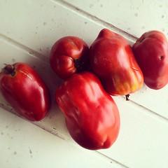 Ici les tomates ont du goût.