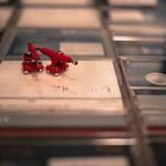 PlanktOon - Rebirth Red
