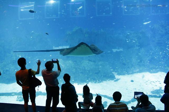 RWS S.E.A Aquarium 606