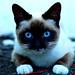 Kitty por Alberto Cavazos