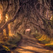 sunrise at the dark hedges by richter christian