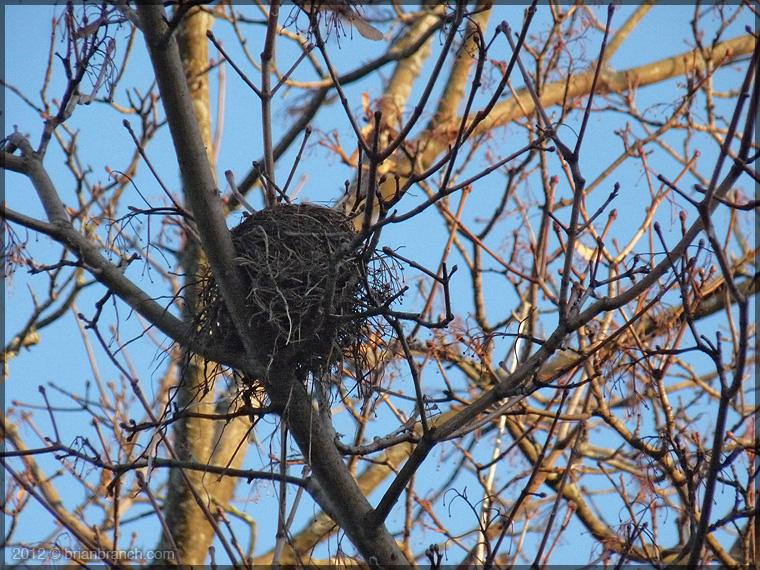 P1290648_nest