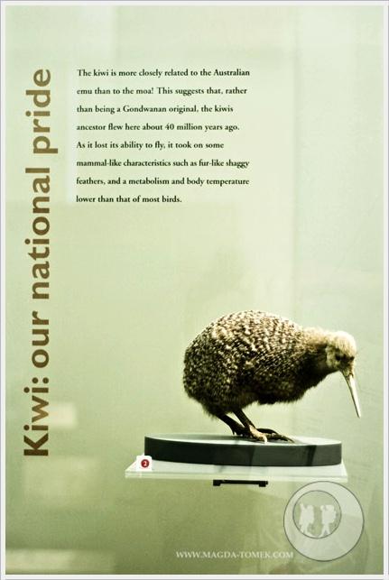 2012 08 30_Magda i Tomek Dookola Swiata_Auckland_DSC_0081