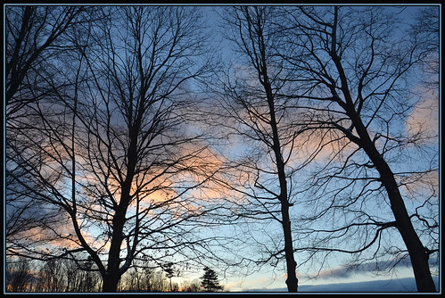 trees sunset nature silhouette evening twilight december vespers twilighttime