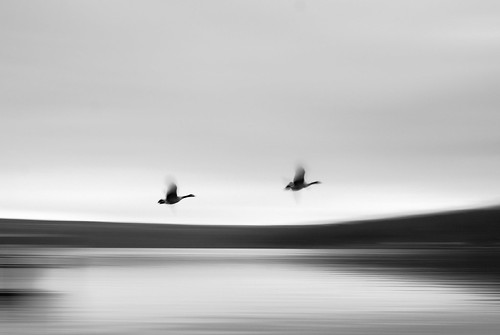 park new york morning winter white lake ny black blur bird nature water birds sunrise dawn flying state finger flight lakes upstate monochromatic canadian taughannock waterscape gesse