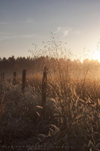 morning light sunrise fence golden fields