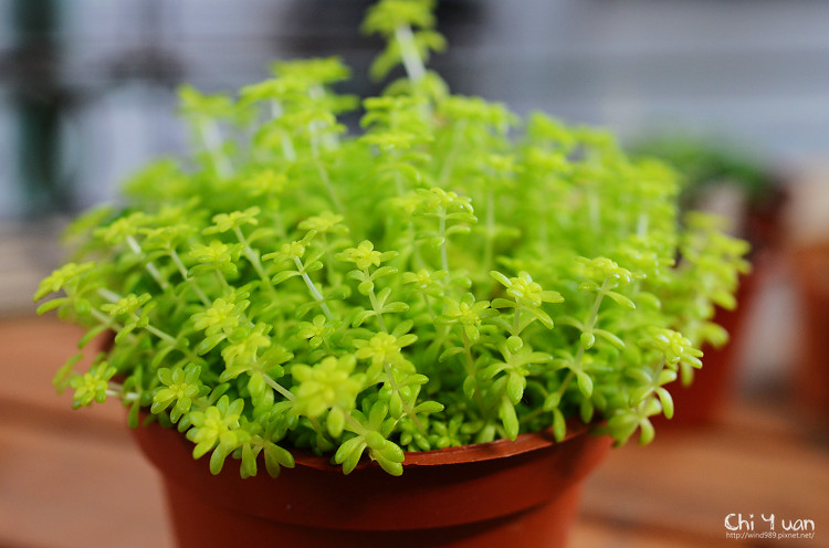 2012多肉植物08.jpg