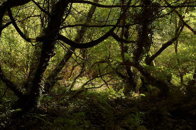 A mystical looking woodland