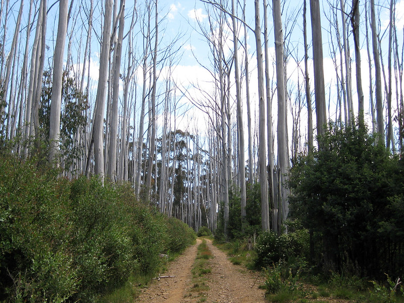 Part of the track (before reaching the Ski Club) - Mount Wills - Alpine National Park - Victoria - Australia