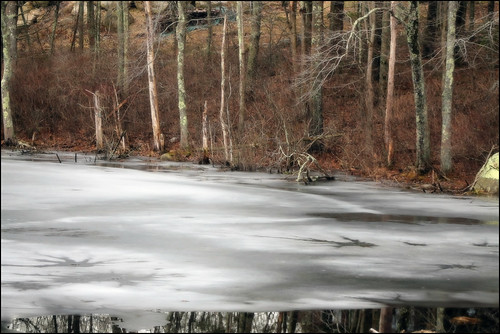 trees winter reflection tree ice nature water rock reflections pond icy frozenwater waterreflection frozenpond waterreflections icywater winterscenery pondreflection pondreflections winterreflections icypond scituaterhodeisland bettypond bettypondrhodeisland