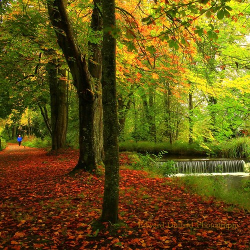 autumn kilkenny ireland fall nature automne landscape waterfall autunna otone