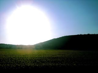 Sunflower Sunset - The train into Croatia
