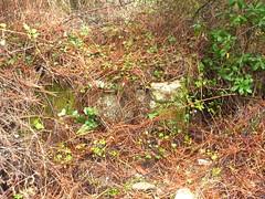 Eglise ruinée de San Martinu : ruines de l'ancienne église