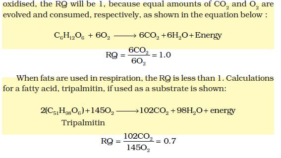 NCERT Class XI Biology  Chapter 14 - Respiration in Plants
