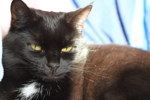Cat Treated For Coryza Still Has Runny Eyes