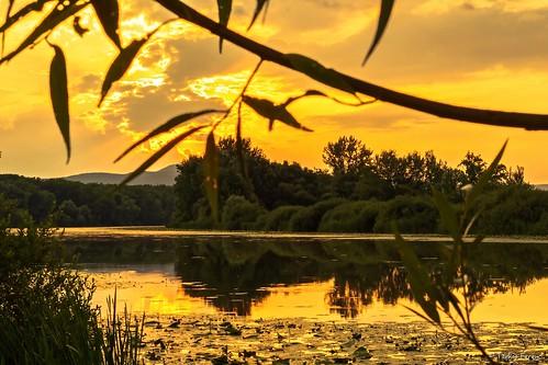 ngc sun sunset sony a6300 travel beautyfull nature hungary magyar zemplén sárospatak tokaj berek óbodrog