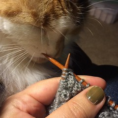 Bless the yarn, bless the needles, bless the janky green nails. #prettykitty, #knittersofinstagram, #catsofinstagram
