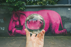 Pink Elephant | GlassBallProject