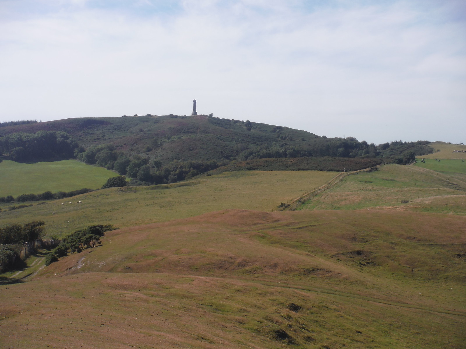Bronkham Hill, Black Down, Hardy Monument SWC Walk 275 Dorchester South Circular or to Portesham
