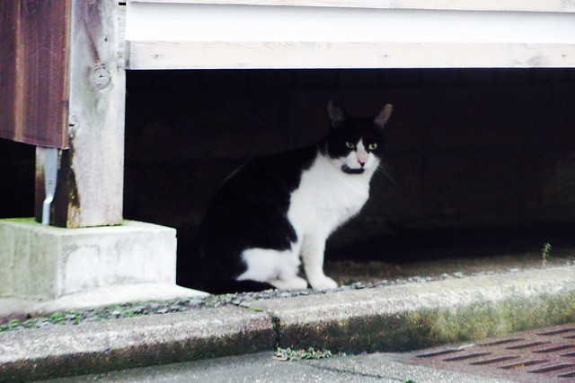 Today's Cat@2016-09-20