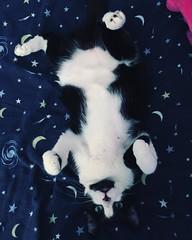 Baby is so freaking adorable #blackandwhitecat #cats_of_instagram
